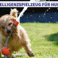 Intelligenzspielzeug für Hunde - Vergleich und Test der besten Spielzeuge oder doch selber machen?