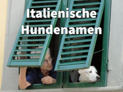 Italienische Namen für Hunde