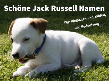 21 schöne Jack Russell Namen, für Weibchen und Rüden mit Bedeutung