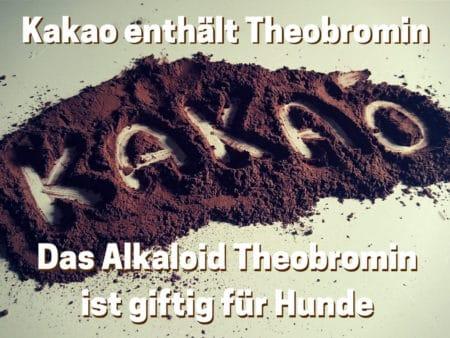 Kakao enthältTheobromin