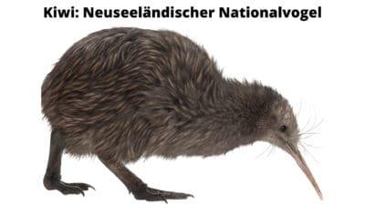 Kiwi ist der neuseeländische Nationalvogel