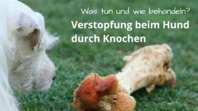 Knochenkot: Verstopfung beim Hund durch Knochen
