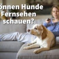 Können Hunde Fernsehen schauen? Und was erkennt Ihr Hunde auf der Mattscheibe?