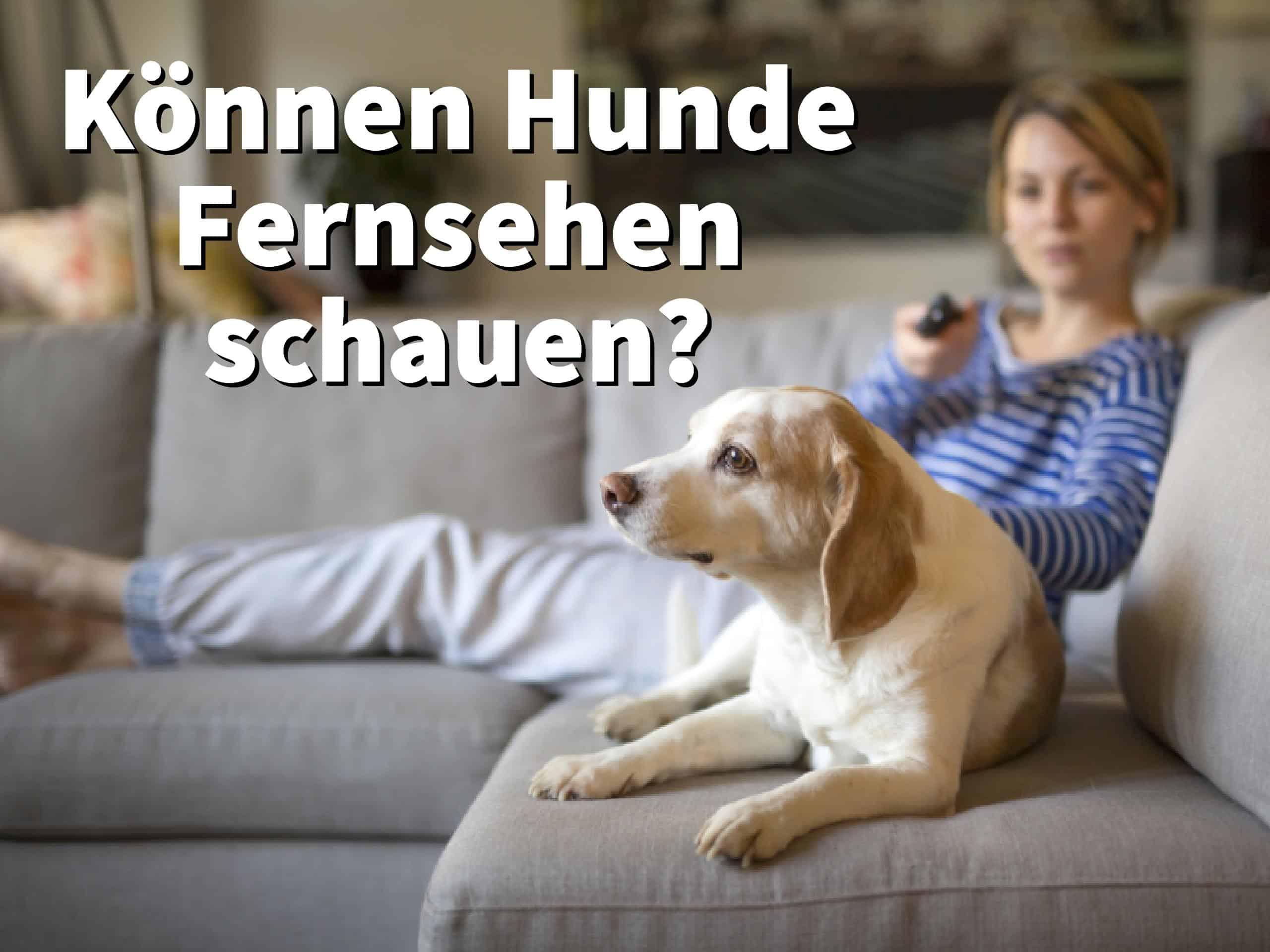 Können Hunde Fernsehen