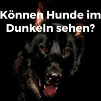 Können Hunde im Dunkeln sehen?