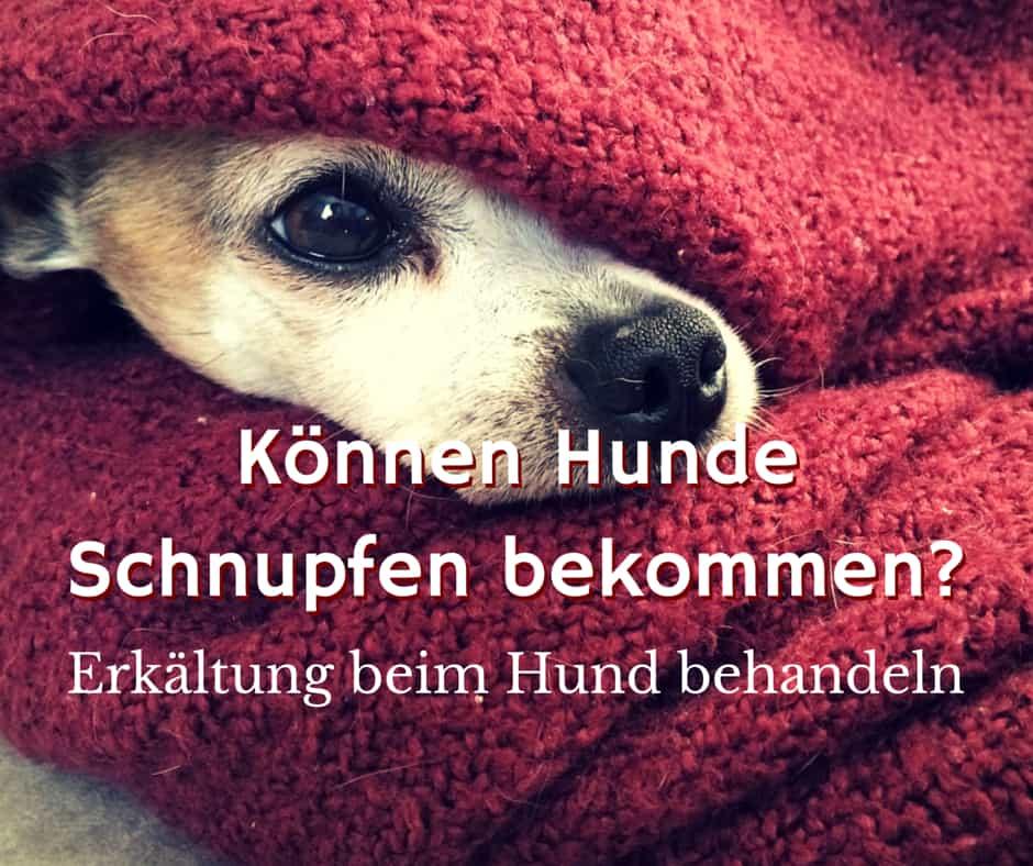 Schnupfen beim Hund behandeln und Erkältung lindern