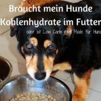 Braucht mein Hund Kohlenhydrate im Futter oder ist Low Carb jetzt Mode für Hunde?