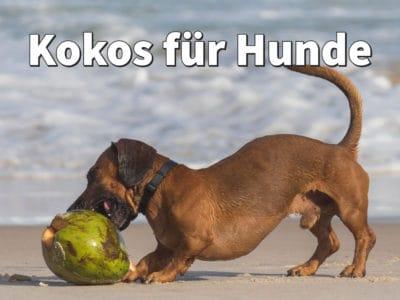 Kokos für Hunde: Kokosöl, Kokosflocken, Kokosnuss