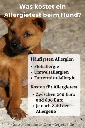 Kosten für einen Allergietest beim Hund