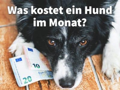 Was kostet ein Hund im Monat? Monatliche Kosten und fixe Ausgaben