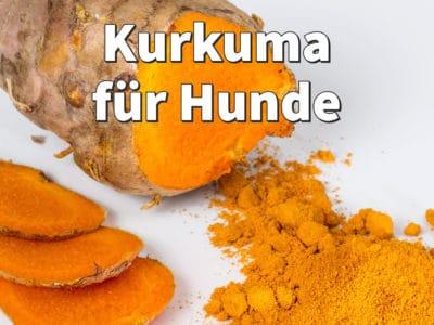 Kurkuma für Hunde: natürliches Heilmittel aus Curcumin und Piperin