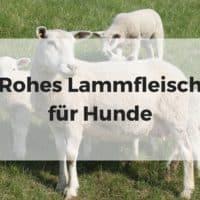 Rohes Lammfleisch für Hunde
