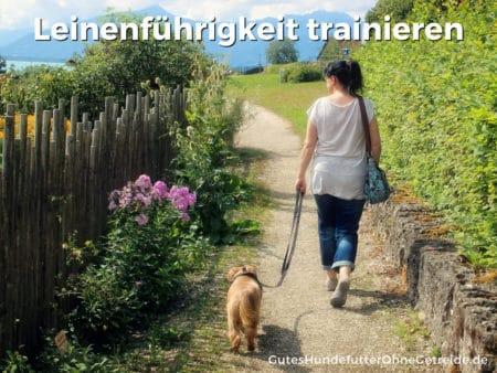 Leinenführigkeit trainieren