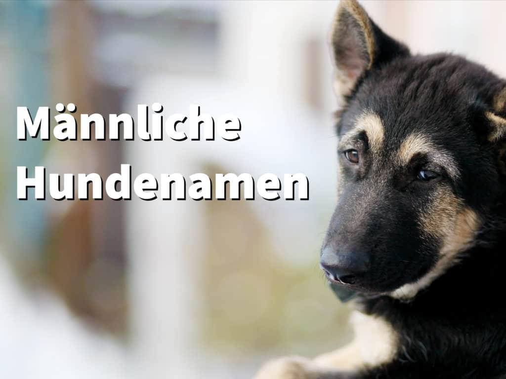 Männliche Hundenamen - 159 coole, ausgefallene und beliebte Namen für Rüden
