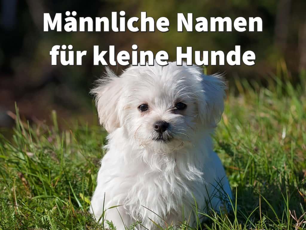 Hunderassen Kleiner Hund