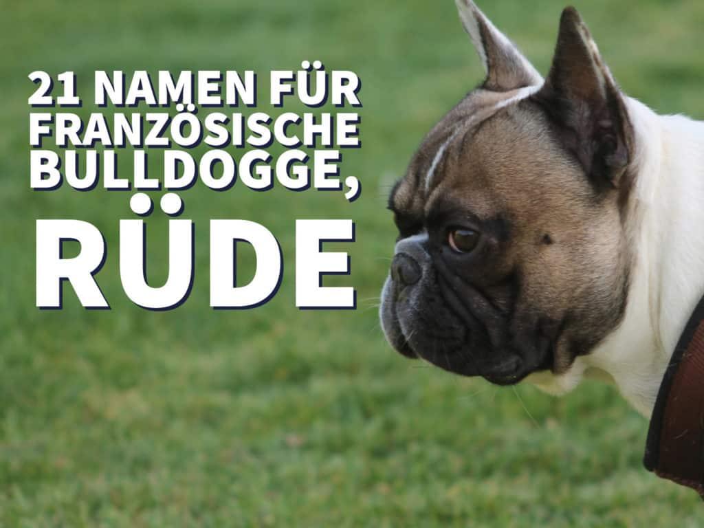 21 Namen für Französische Bulldogge, Rüde
