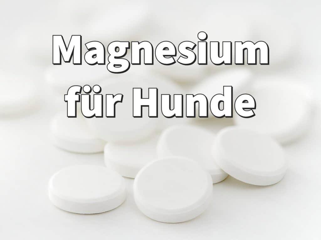 Magnesium für Hunde: Dosierung, Wirkung und Erfahrungen