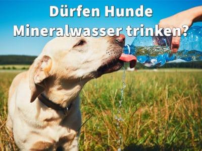 Dürfen Hunde Mineralwasser trinken? Oder ist Sprudel schädlich?