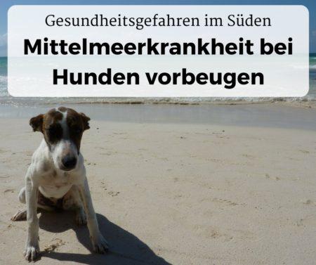 Mittelmeerkrankheit bei Hunden vorbeugen und Gefahren im Süden