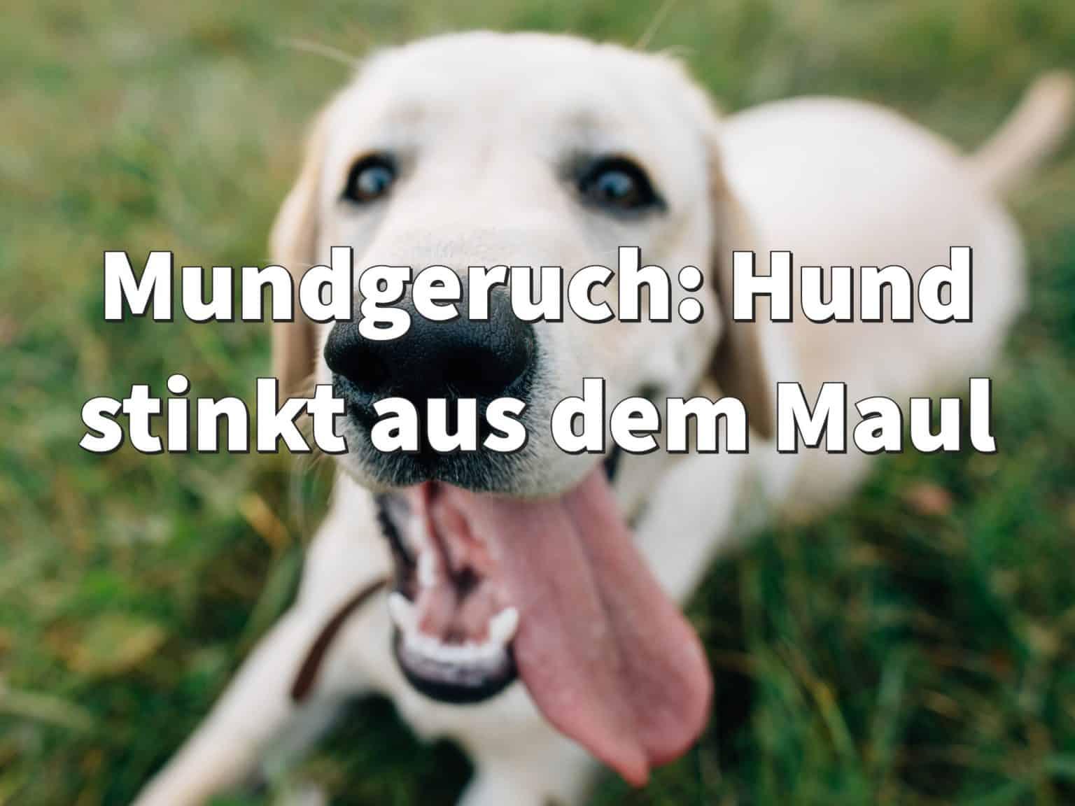 Mundgeruch: Hund stinkt aus dem Maul, Ursachen & Hausmittel