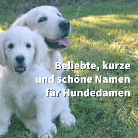 Beliebte weibliche Hundenamen sind kurz und schön