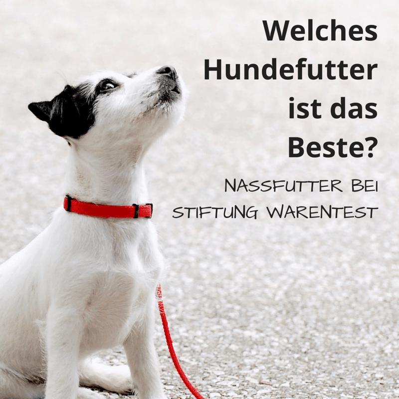 Welches Hundefutter ist das Beste? Nassfutter bei Stiftung Warentest