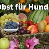 Obst für Hunde: Gesundes Obst das Hunde essen dürfen