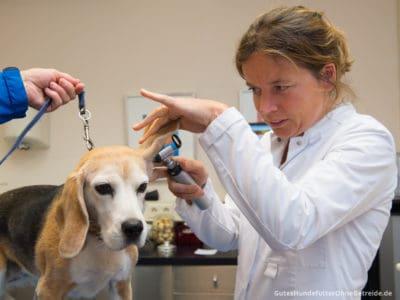 Tierärztin untersucht Hundegehör mit Otoskop