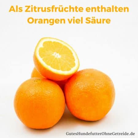 Zitrusfrüchte wie Orangen haben einen hohen Säuregehalt der zu Verdauungsbeschwerden bei Hunden führen kann