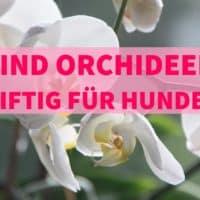 Sind Orchideen giftig für Hunde?