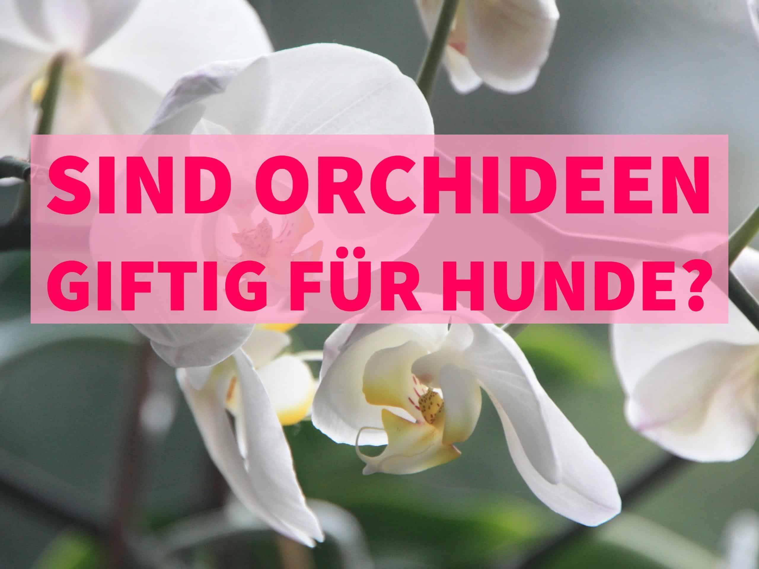 orchideen giftig für hunde