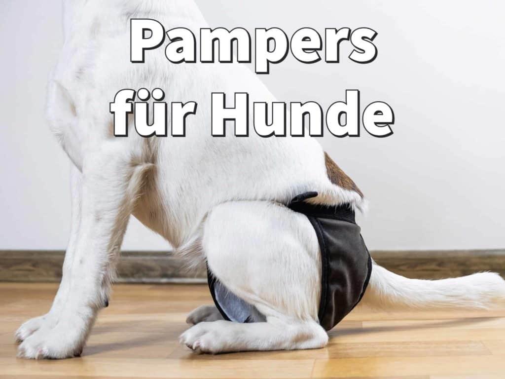 Pampers für Hunde: Beste Hundewindeln für Hündin und Rüden