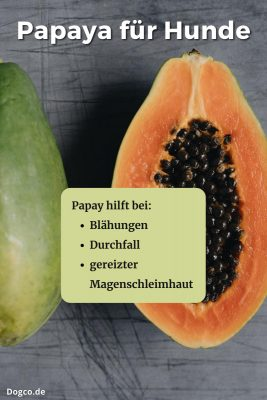 Papaya für Hunde hilft bei Blähungen, Durchfall und gereizter Magenschleimhaut