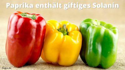 Grüne und rohe Paprika enthalten giftiges Solanin