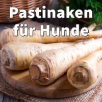 Pastinaken für Hunde: Roh oder gekocht füttern, was ist gut und gesund?