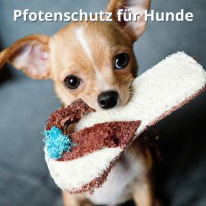 Pfotenschutz für Hunde