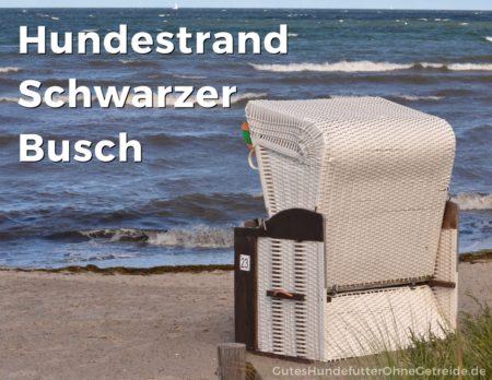 """Hundestrand """"Schwarzer Busch"""" auf der Insel Poel"""