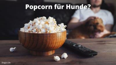 Popcorn für Hunde