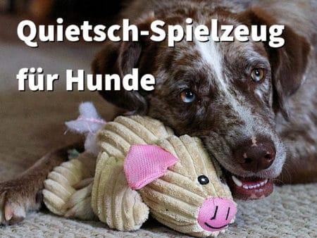 Quietsch-Spielzeug für Hunde