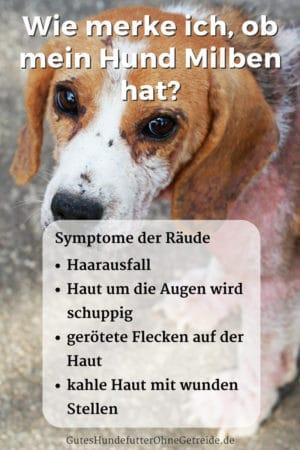 Räude beim Hund erkennen: Wie merke ich, ob mein Hund Milben hat?