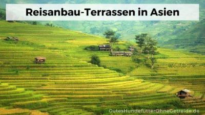 Reisanbau auf Terrassen in Asien