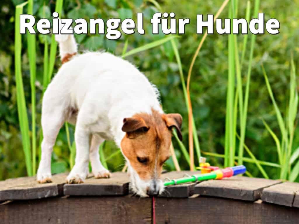 Reizangel für Hunde: Wie sinnvoll ist das Training?