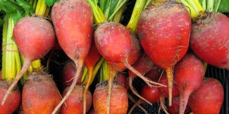Rote Beete, ein gesundes Gemüse für Hunde