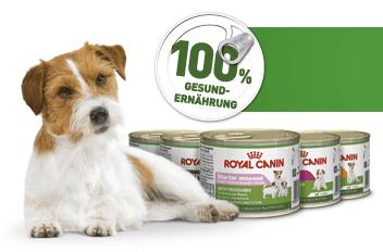 Feuchtnahrung Royal Canin