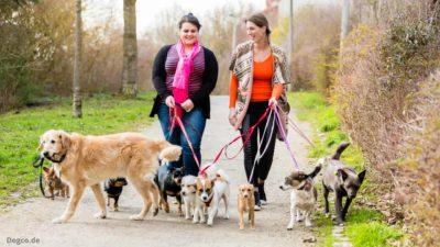 Rudelhaltung in der Hundepension bietet Vorteile