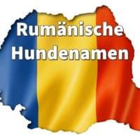 Rumänische Hundenamen: weiblich und männlich mit Bedeutung