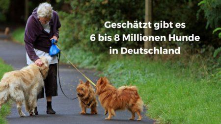Geschätzte 6 bis 8 Millionen Hunde gibt es in Deutschland