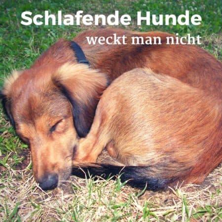 Sprichwort: Schlafende Hunde weckt man nicht