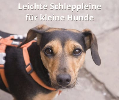 Schleppleine für kleine Hunde: Leichte Biothane Schleppleinen