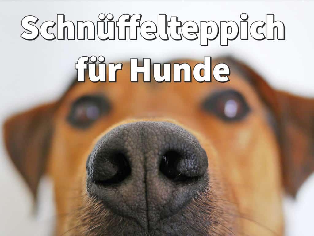 Schnüffelteppich für Hunde: selber machen oder kaufen?